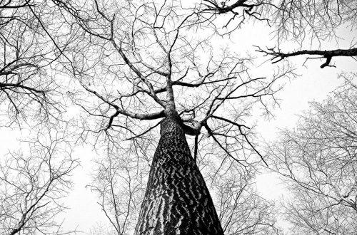 De takken aan een boom verbeelden de verschillende keuzes die je kunt maken in de overgang.