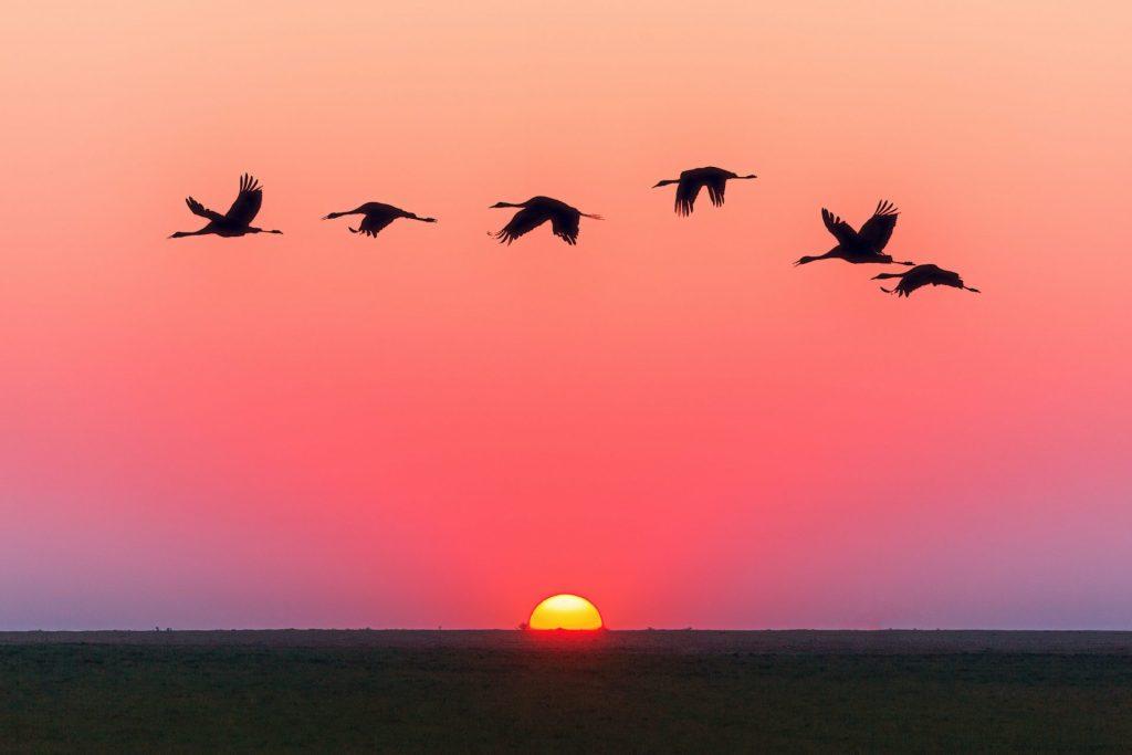 Als vrouw in de overgang heb je te maken met kinderen die uit huis gaan. Deze vogels symboliseren de uitvliegende kinderen.