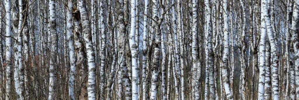 Vrouwen in de overgang zien door de bomen het bos niet meer. In een GRATIS gesprek help ik je de draad weer op te pakken.